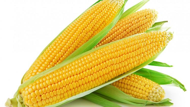 Kukurydza – źródło witamin iminerałów