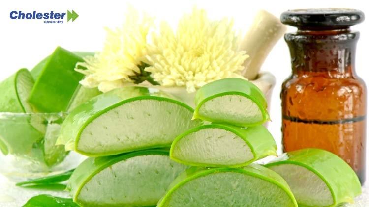 Aloes – właściwości odżywcze ipielęgnujące